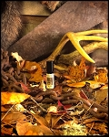 OUTPOST PERFUME OIL 5 ml - Sugar Crystals, Spruce, Fir, Patchouli, Soft Woods, Bayberry, Mistletoe, Amber